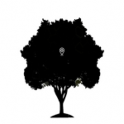 The Daily Tree iPhone & Android App