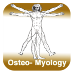Anatomy - Osteo-Myology
