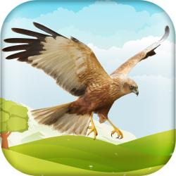 AR & Geo-location Based Game App - HuntingBirds